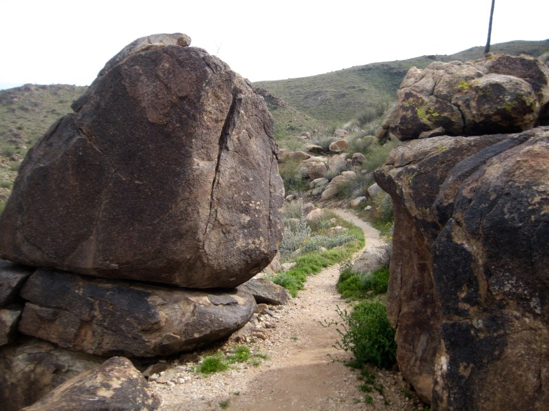 Middle Mesquite Canyon Trail