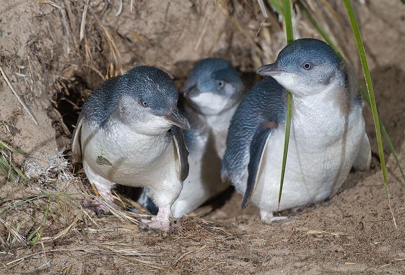 Look at those little guys, squeeeeee!!!!!