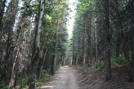 Forested area at the start of the trail