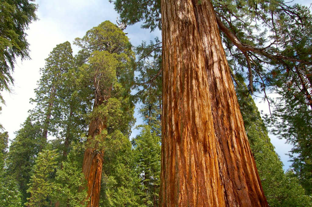 Sequoia National Forest - Trail of 100 Giants