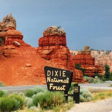 Best Hikes in Dixie National Forest (UT)