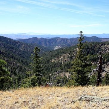 Best Hikes in Gila National Forest (NM)
