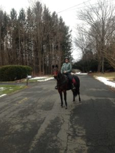 gaited horse training
