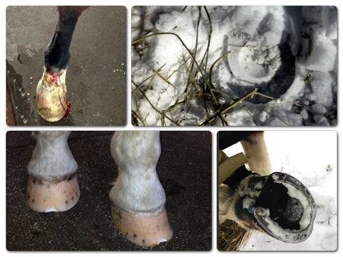 hoof and leg injuries on the trail
