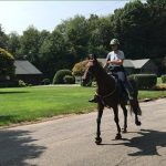 Standardbred horse gait training