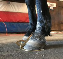 assessing hoof angles