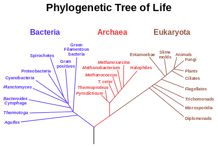 Phylogenetic_tree