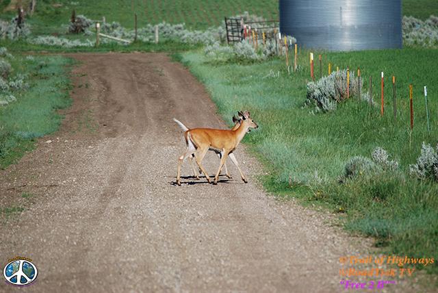 Montana-Backroads-Spring-Birdwatching-Trail of Highways-RoadTrek TV-Social SEO-Organic-Content Marketing-Tom Ski-Skibowski-Photography-Travel-Media-34