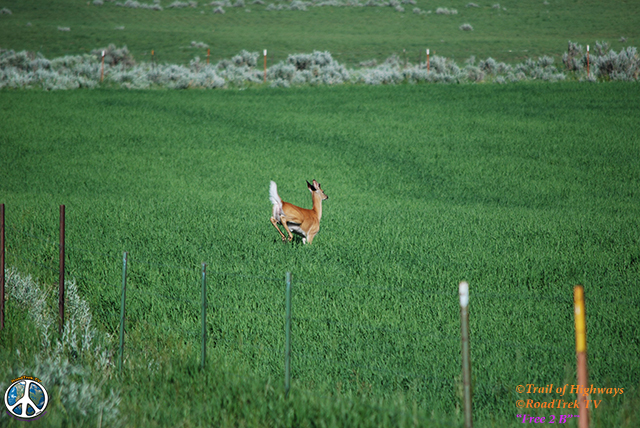 Montana-Backroads-Spring-Birdwatching-Trail of Highways-RoadTrek TV-Social SEO-Organic-Content Marketing-Tom Ski-Skibowski-Photography-Travel-Media-35