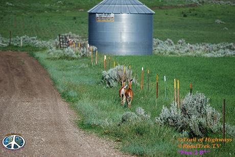 Montana-Backroads-Spring-Birdwatching-Trail of Highways-RoadTrek TV-Social SEO-Organic-Content Marketing-Tom Ski-Skibowski-Photography-Travel-Media-36
