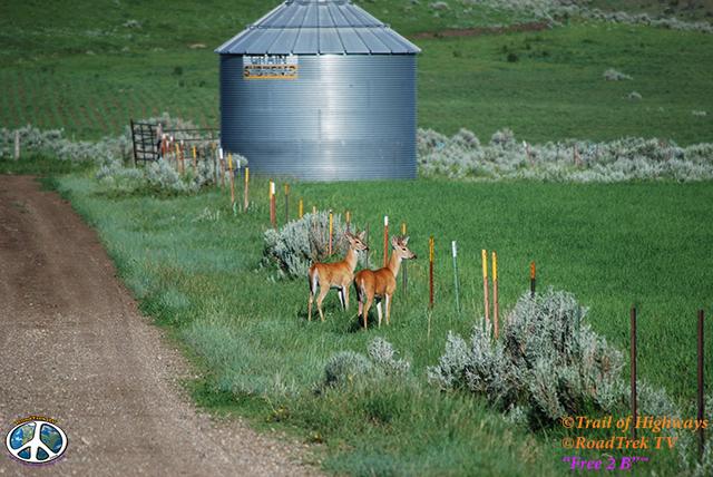 Montana-Backroads-Spring-Birdwatching-Trail of Highways-RoadTrek TV-Social SEO-Organic-Content Marketing-Tom Ski-Skibowski-Photography-Travel-Media-37