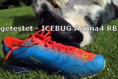 icebug-anima-banner1