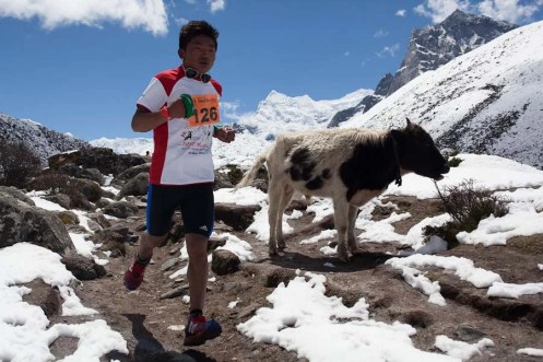 everest marathon 2014-183