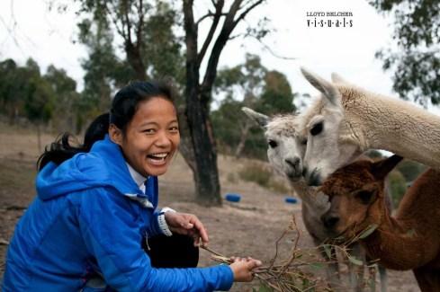 lloyd mira rai alpacca australia