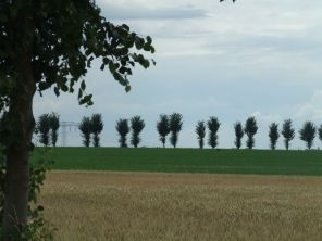 Bäume wie in der Toscana, nur aufgeplatzt.