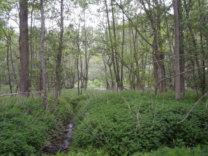 Blick in die feuchte Lubitzer Heide
