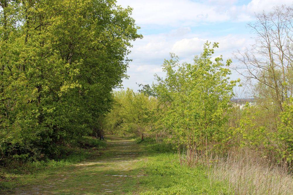 Die Nordflanke des neuen Hahnebergs