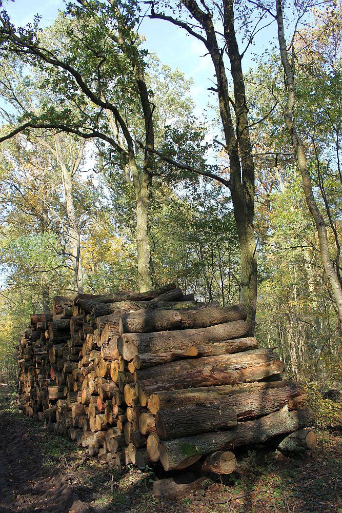 Der Nachschub für die vielen Holzstapel liegt schon überall herum
