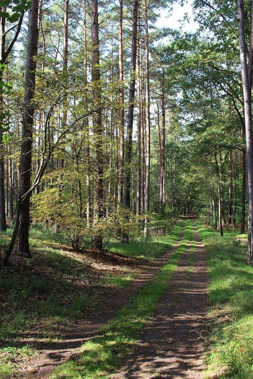 Durch den Spandauer Forst