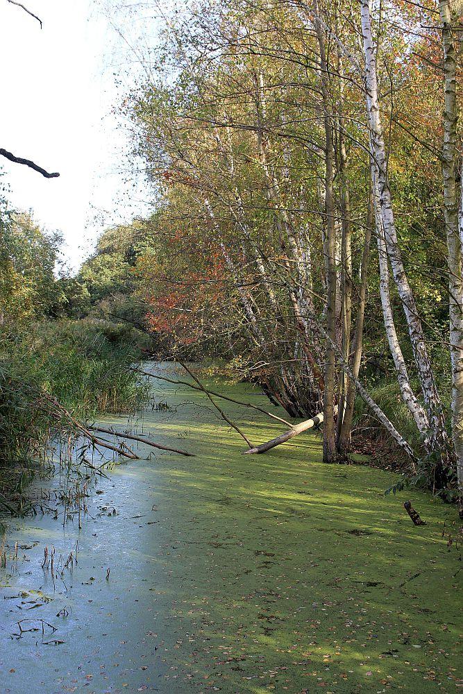 Nieder Neuendorfer Kanal