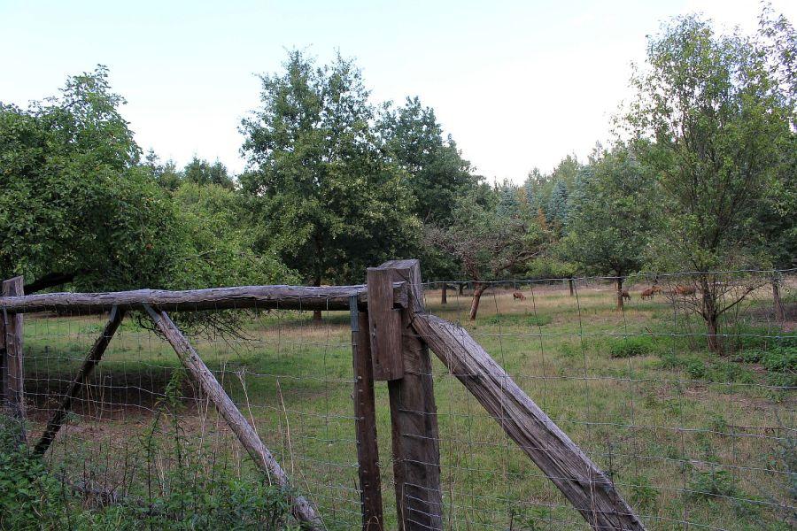 Streuobstwiese mit extensiver Beweidung durch Ziegen.