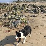 dog near Swansea Bike Path