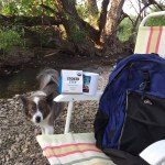photo of dog, daypack & coffee