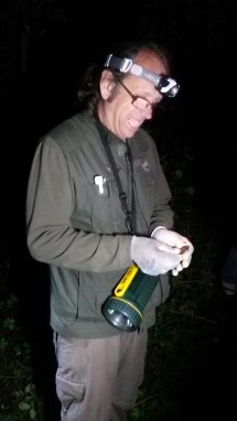 A member of Nottinghamshire Bat Group showing us a recently caught Nathusius' Pipistrelle.