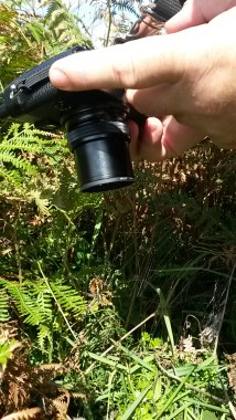 Dad photographing the Wasp Spider, Nr Loredo, Cantabria. September 2015.