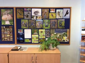 Sorrel set up a nature table at her school, decorated with Wildlife Watch posters.