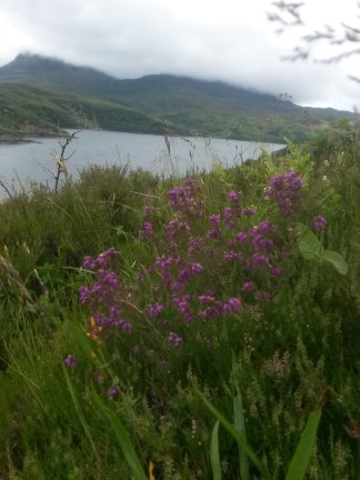 Lovely bell heather and the view from Kylesku Bridge, looking North-West towards the sea.