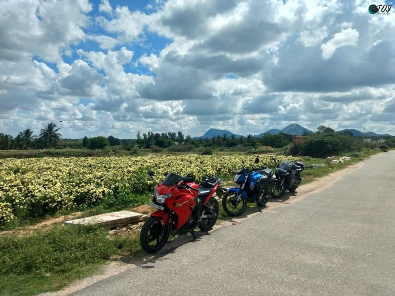 Marigold Fields En Route Avalabetta