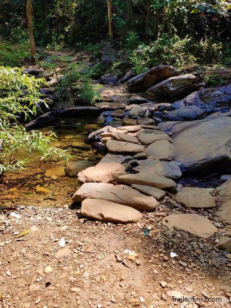 Butterflies On Hiking Trail To Kudlu Teertha Falls