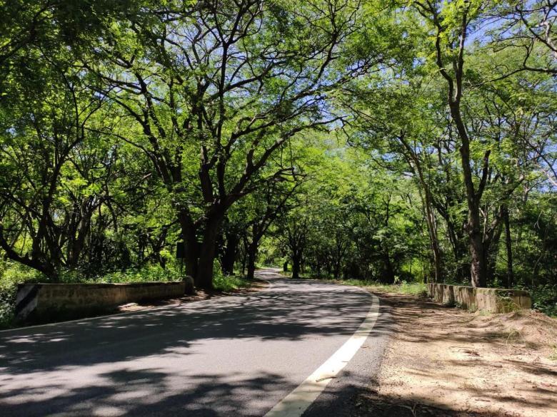 Roads Of Devarayanadurga State Forest