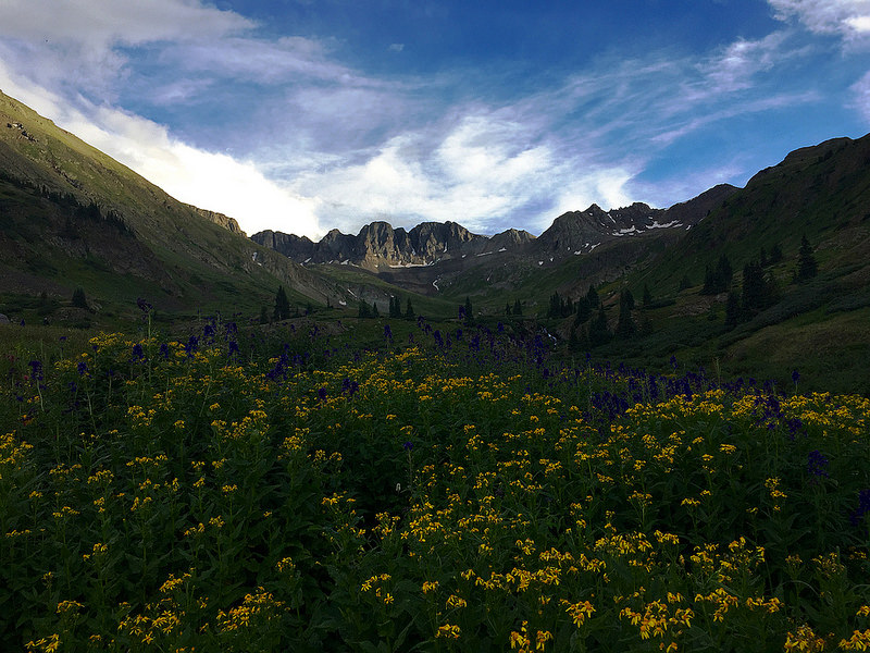 American Basin Evening Wildflowers July