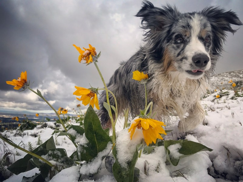Dogs, Wildflowers, and Snow