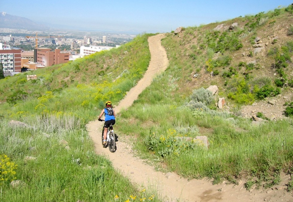 """""""Zoo-TO-U"""" Foothill Trails Renovation Project"""