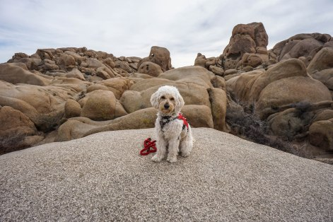 Camping at Joshua Tree National Park and Indian Cove Campground