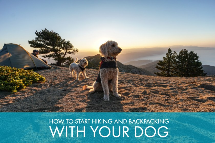 How To Start Hiking And Backpacking With Your Dog Trail To