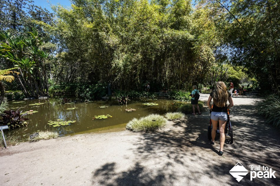 The Huntington Lily Ponds