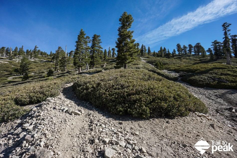 Hiking Mt. Baldy via the Ski Hut Trail (Baldy Bowl Trail)