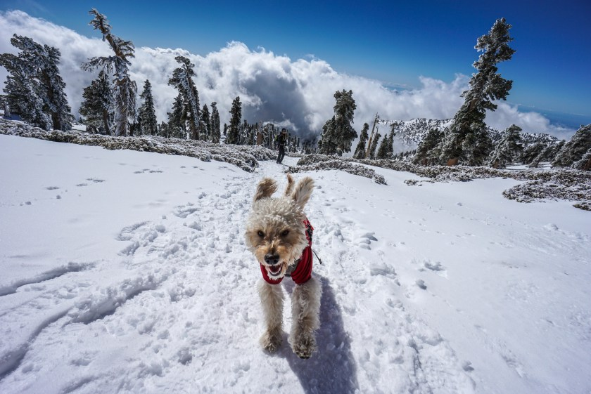 Expert Advice To Get You Outside And Hiking With Your Dogs More in 2019