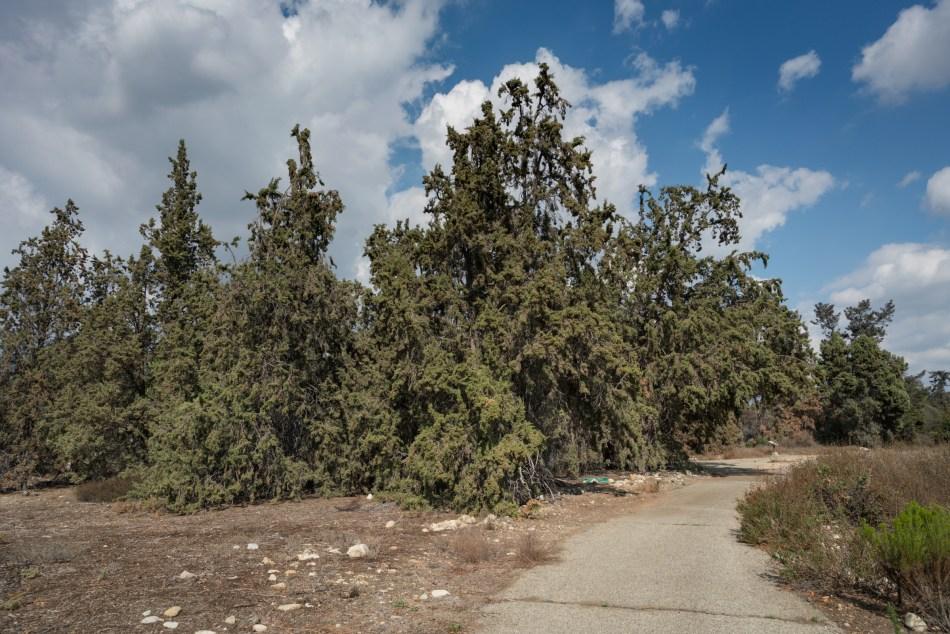 A Walk Around The Rancho Santa Ana Botanic Garden – Claremont, CA