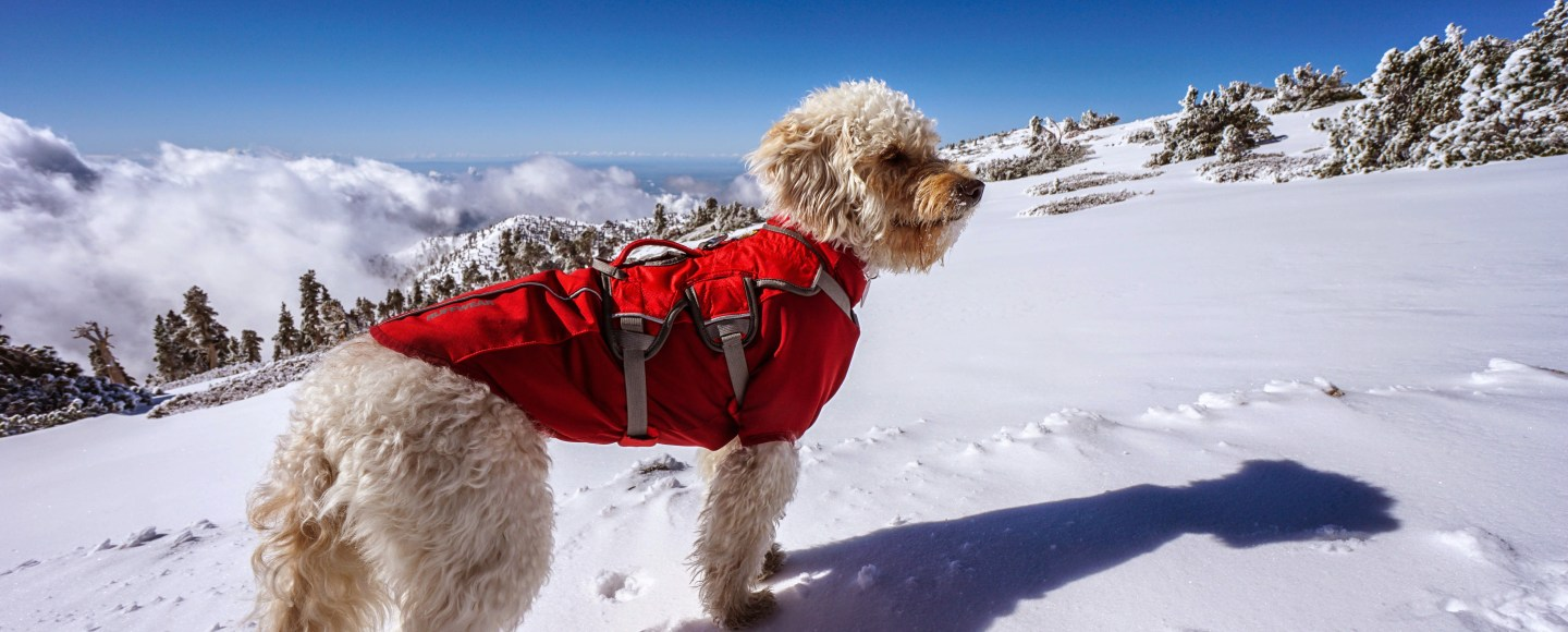 The 10 Best Hiking and Backpacking Gear Items For Dogs