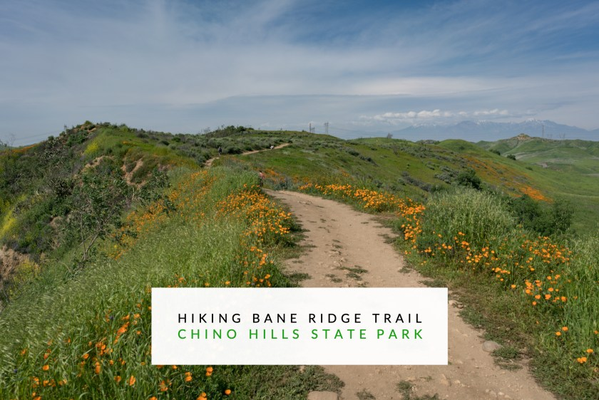 Hiking Bane Ridge Trail In Chino Hills State Park