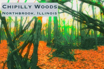 Chipilly Woods Featured Picture