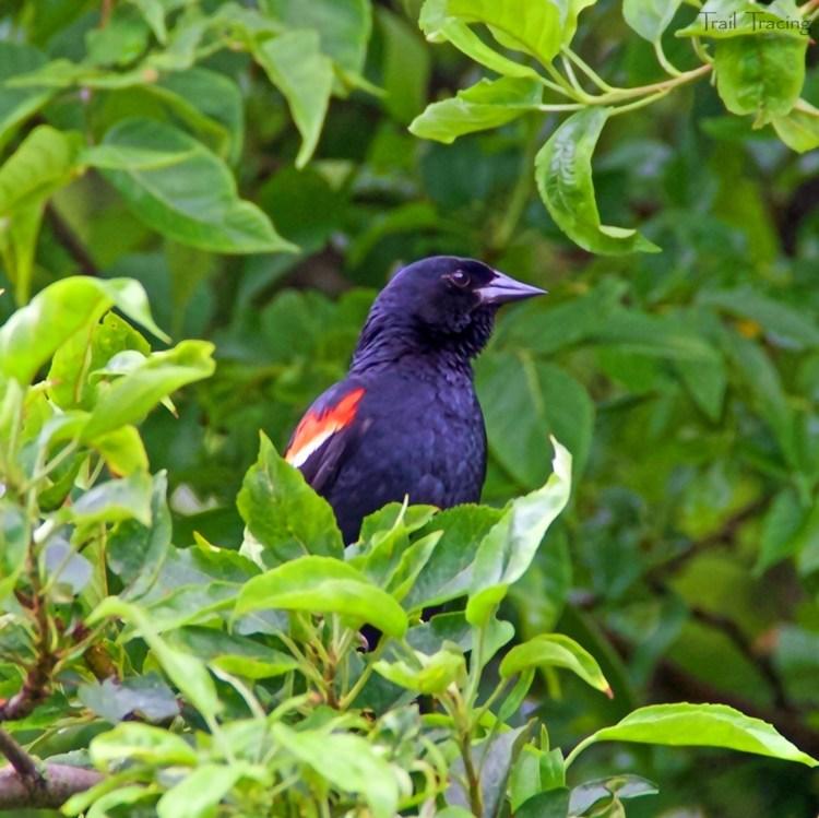 Montrose Point Bird Sanctuary 4 7-22-18