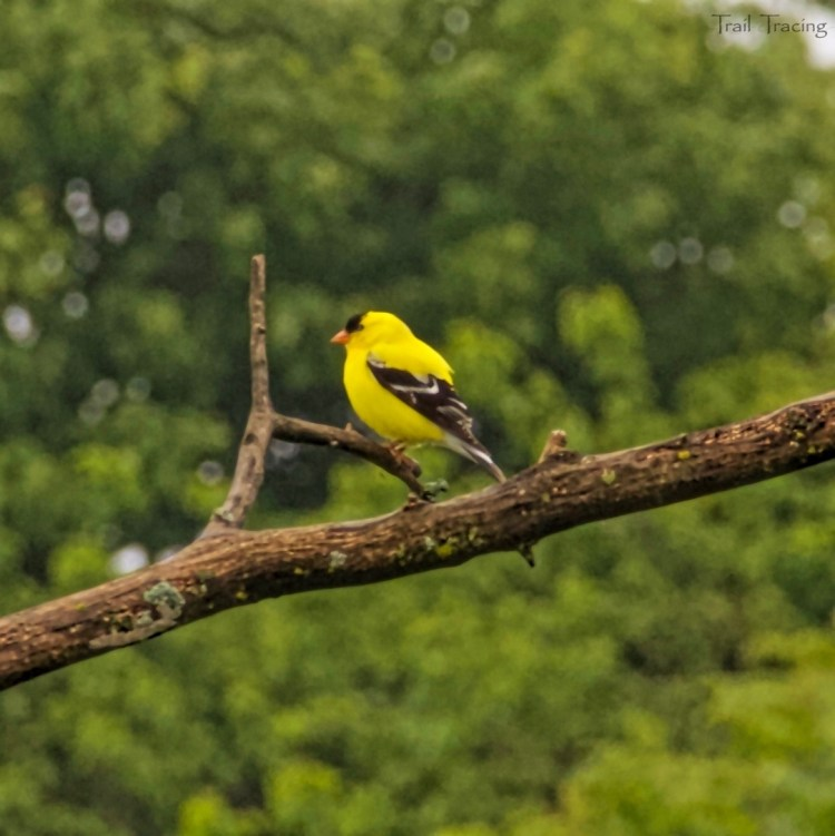 Montrose Point Bird Sanctuary 3 7-22-2018