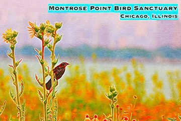 Montrose Point Bird Sanctuary Thumbnail