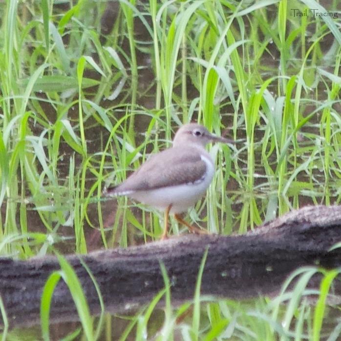 LaBagh Woods Bird